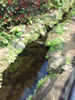 北沢川緑道の桜_f0112873_23461468.jpg