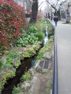 北沢川緑道の桜_f0112873_23465855.jpg