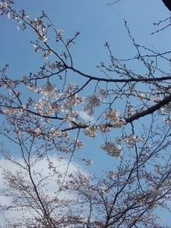 北沢川緑道の桜_f0112873_23503251.jpg