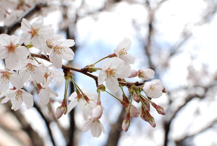 春の靴散歩。 レッドウィング ポストマン RW3104_b0168993_185309.jpg