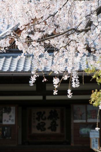 2016桜だより11上品蓮台寺_e0048413_20514433.jpg