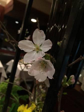 よしの桜_e0025817_00042415.jpg