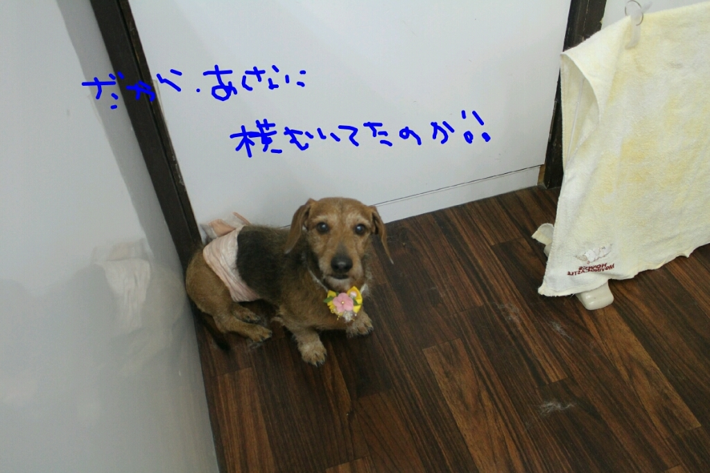 b0130018_20042422.jpg