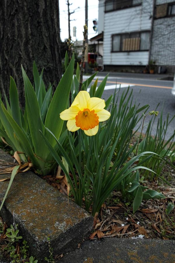3月27日、街中の春を探して_c0223825_00234313.jpg