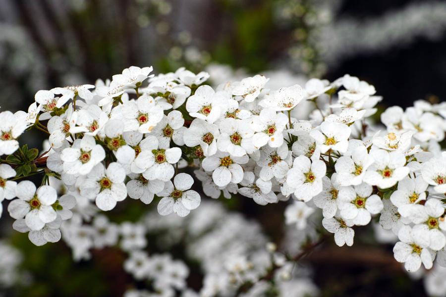 3月27日、街中の春を探して_c0223825_00325263.jpg