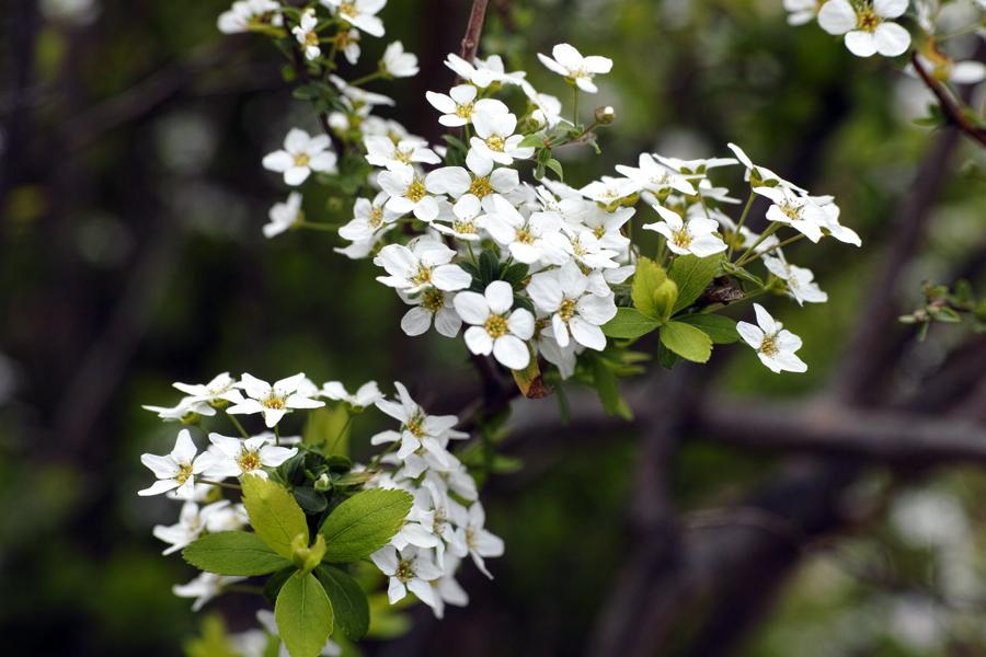 3月27日、街中の春を探して_c0223825_00502569.jpg