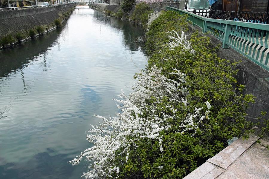 3月27日、街中の春を探して_c0223825_01035700.jpg