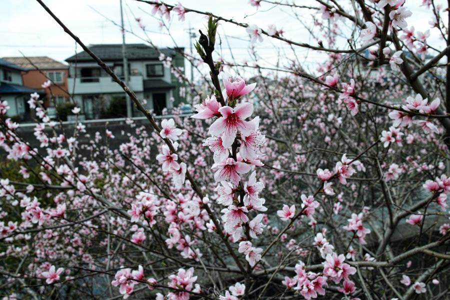 3月27日、街中の春を探して_c0223825_01103703.jpg