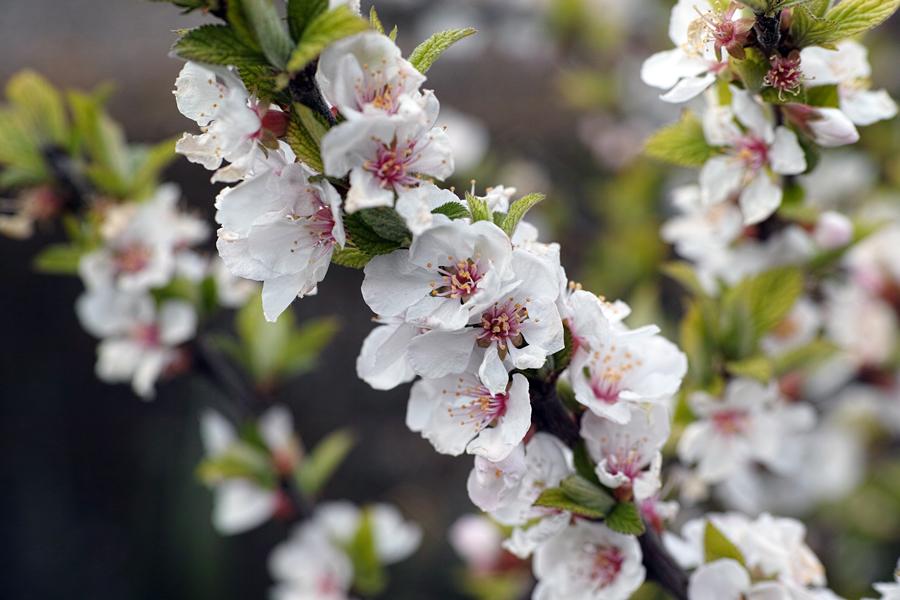 3月27日、街中の春を探して_c0223825_01312096.jpg