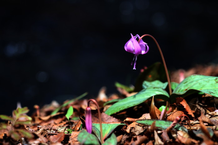 福島市 水林の花_d0106628_17260787.jpg