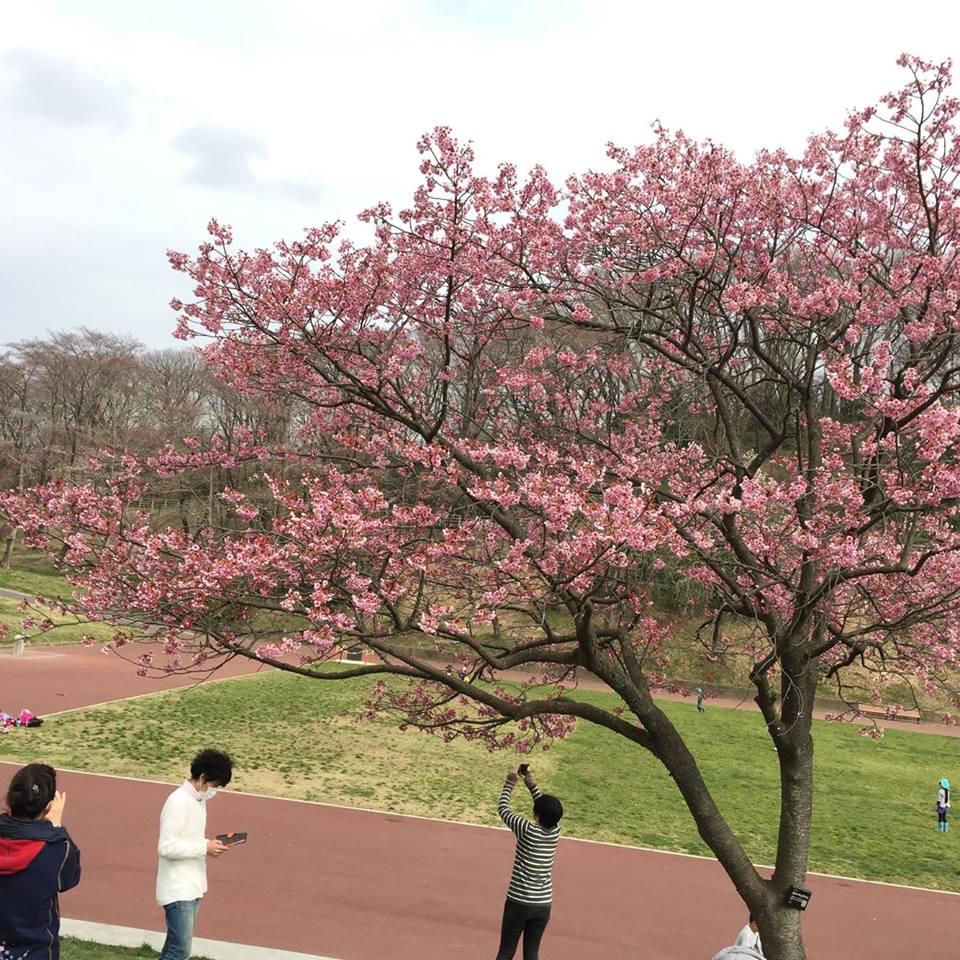 桜_e0170128_20415958.jpg