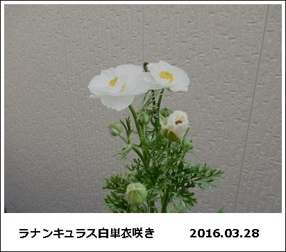 e0033229_18302395.jpg