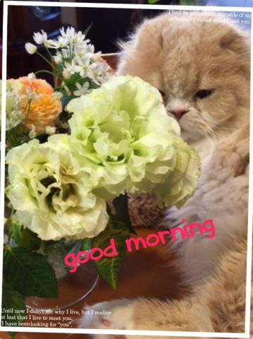 猫ブーム_c0223630_09192227.jpg