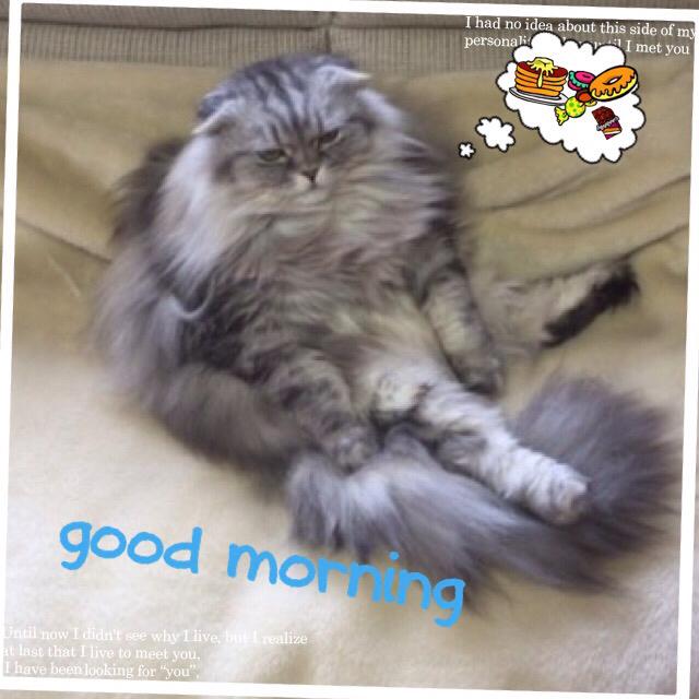 猫ブーム_c0223630_09192230.jpg