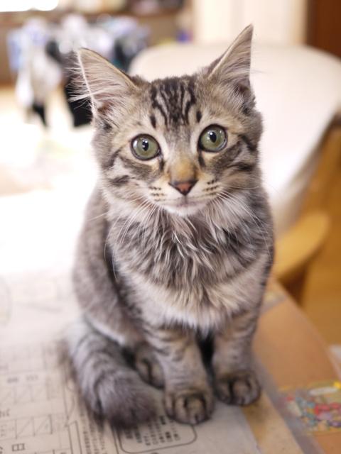 猫のお留守番 トムくん編。_a0143140_22114930.jpg