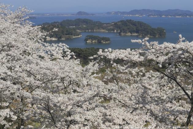 西行戻しの松公園(さいぎょうもどしのまつこうえん)_d0348249_101217.jpg