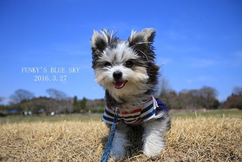 青空散歩で1・2.3~♪_c0145250_10330055.jpg