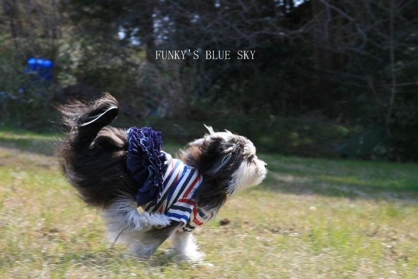 青空散歩で1・2.3~♪_c0145250_10332411.jpg