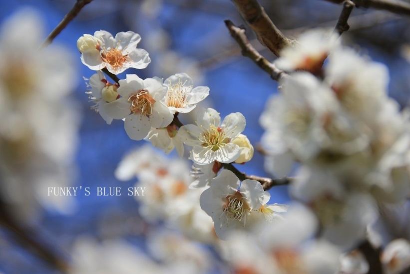 青空散歩で1・2.3~♪_c0145250_10332992.jpg