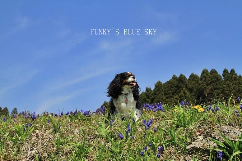 青空散歩で1・2.3~♪_c0145250_10333420.jpg