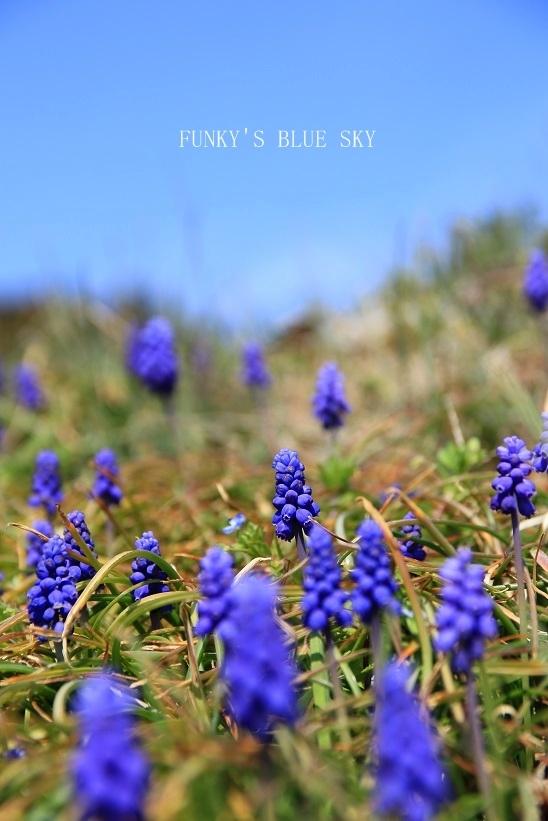 青空散歩で1・2.3~♪_c0145250_10334235.jpg