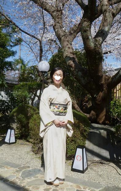上七軒北野をどり・素敵な桜の帯のお客様。_f0181251_17422184.jpg