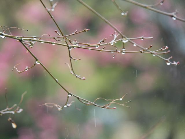 雨に濡れて_a0257652_10225482.jpg