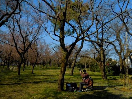 桜 ちらほら_c0327752_10040312.jpg