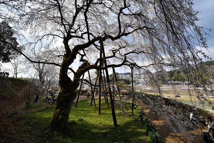 奥山田のしだれ桜_e0170058_18575282.jpg