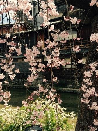 祇園白川ライトアップ_b0341759_01212677.jpg