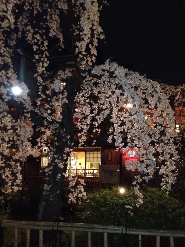 祇園白川ライトアップ_b0341759_01383274.jpg