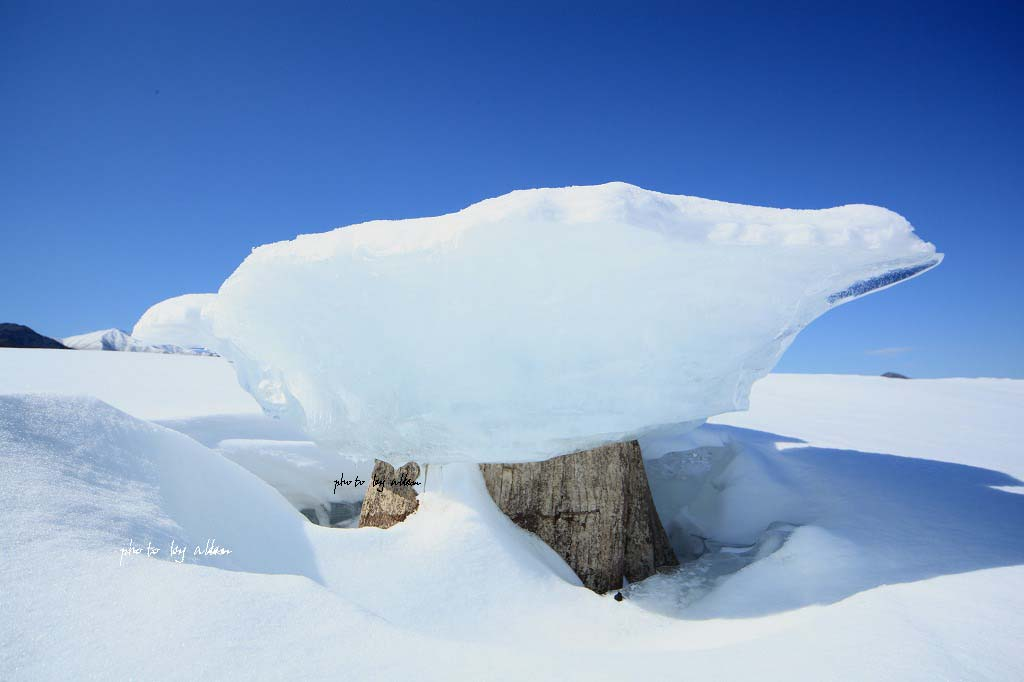 きのこ氷あんどかわゅいももちゃんより~_a0039860_19395258.jpg