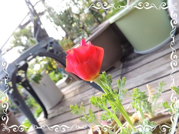 b0351977_20074150.jpg