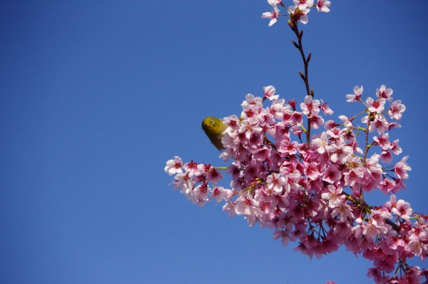 Spring has come, a bird has come_b0078188_21294776.jpg