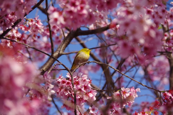 Spring has come, a bird has come_b0078188_21303646.jpg