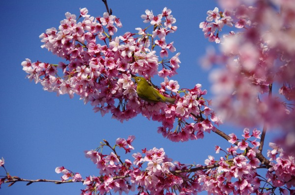 Spring has come, a bird has come_b0078188_2130668.jpg