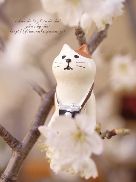 お花見日和 #ねこ助手_b0320893_21160403.jpg