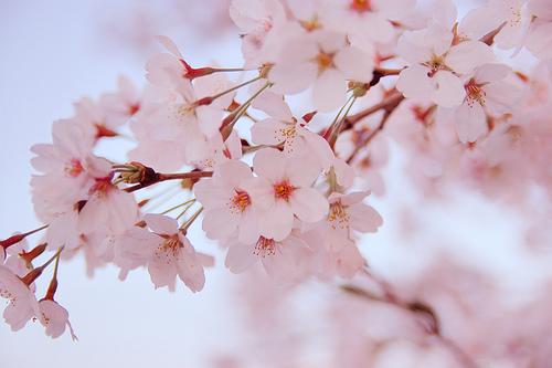 日本の一番季節 3月29日 記す_e0034308_14373472.jpg