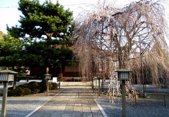 2016 桜だより12 千本釈迦堂_e0048413_2172495.jpg
