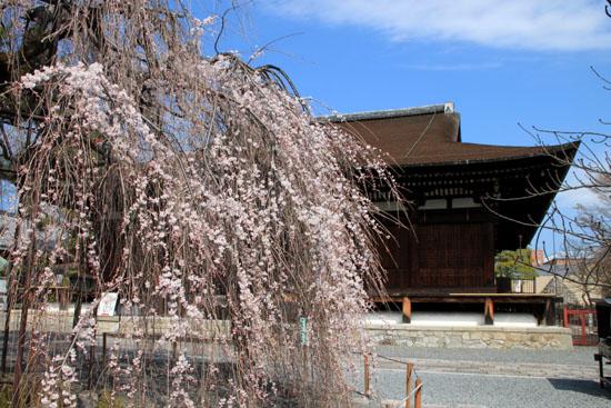 2016 桜だより12 千本釈迦堂_e0048413_2174712.jpg
