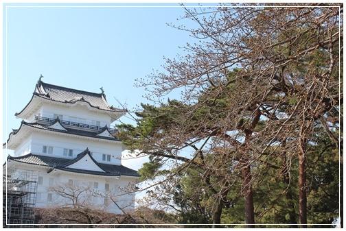小田原城の桜と一夜城 ヨロイズカファーム_c0141025_16414817.jpg