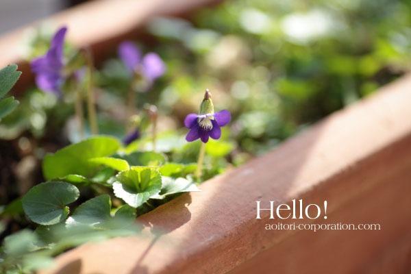 突然、春爛漫!_a0227137_18542674.jpg