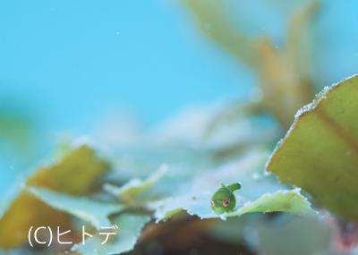 ぽかぽか〜_b0163039_1622758.jpg