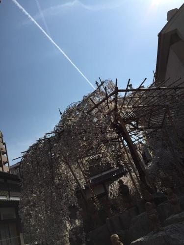 六角堂と飛行機雲_a0103940_16595810.jpg