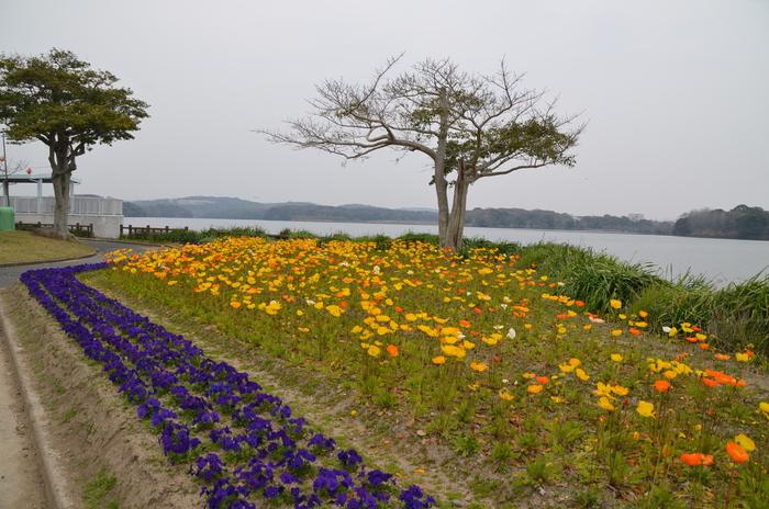 """Tokiwa ParkからUBE Airport・・・そして旅立ち\""_d0153941_22401611.jpg"