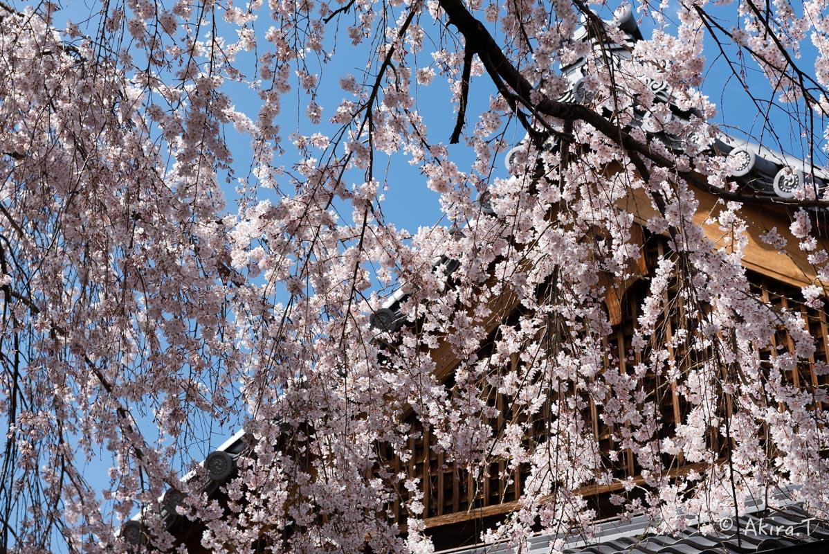 京都の桜 2016 〜本満寺〜_f0152550_2222317.jpg