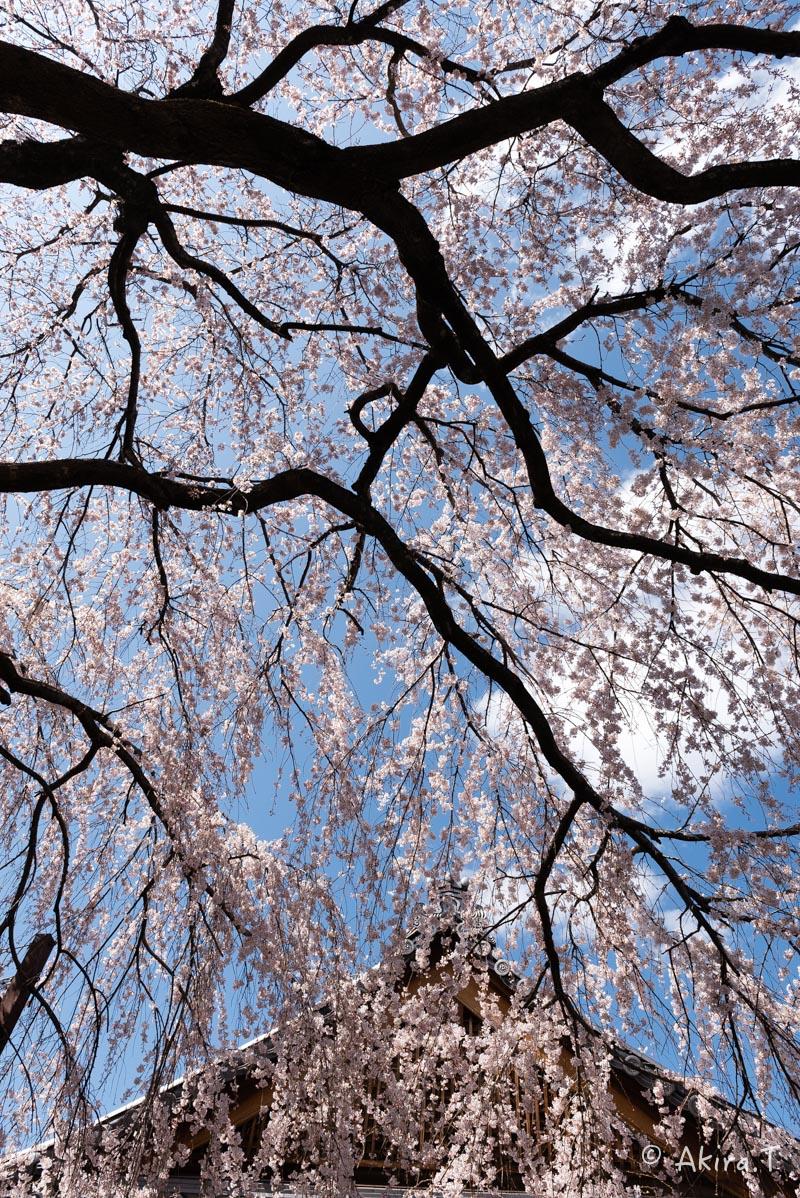 京都の桜 2016 〜本満寺〜_f0152550_22261577.jpg