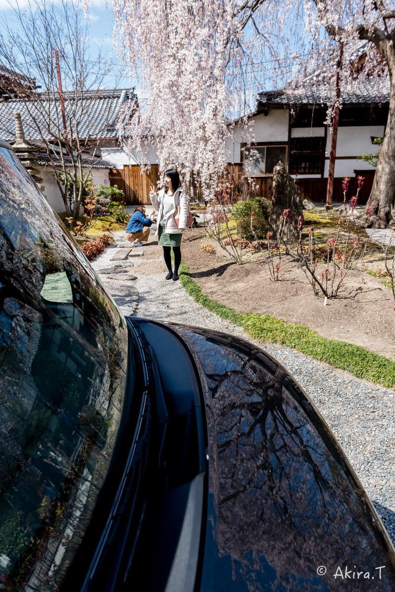 京都の桜 2016 〜本満寺〜_f0152550_22282111.jpg