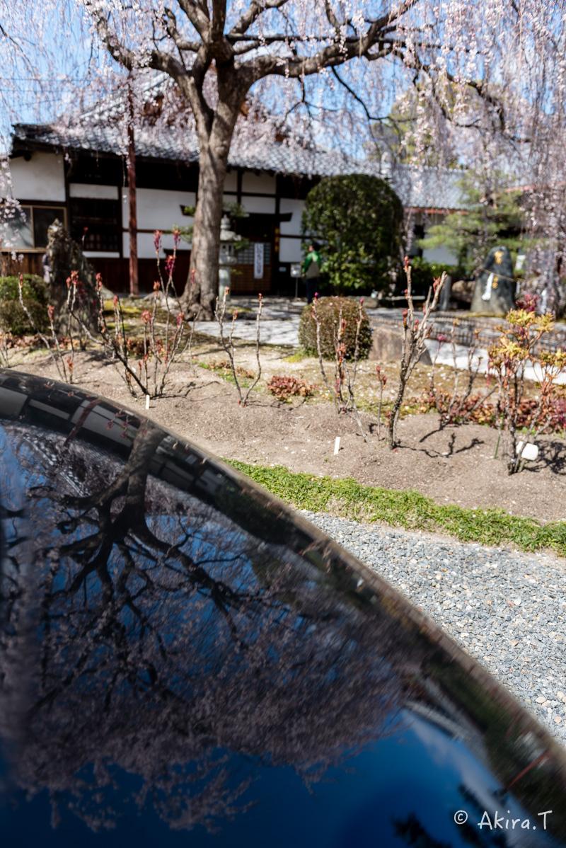 京都の桜 2016 〜本満寺〜_f0152550_2228461.jpg