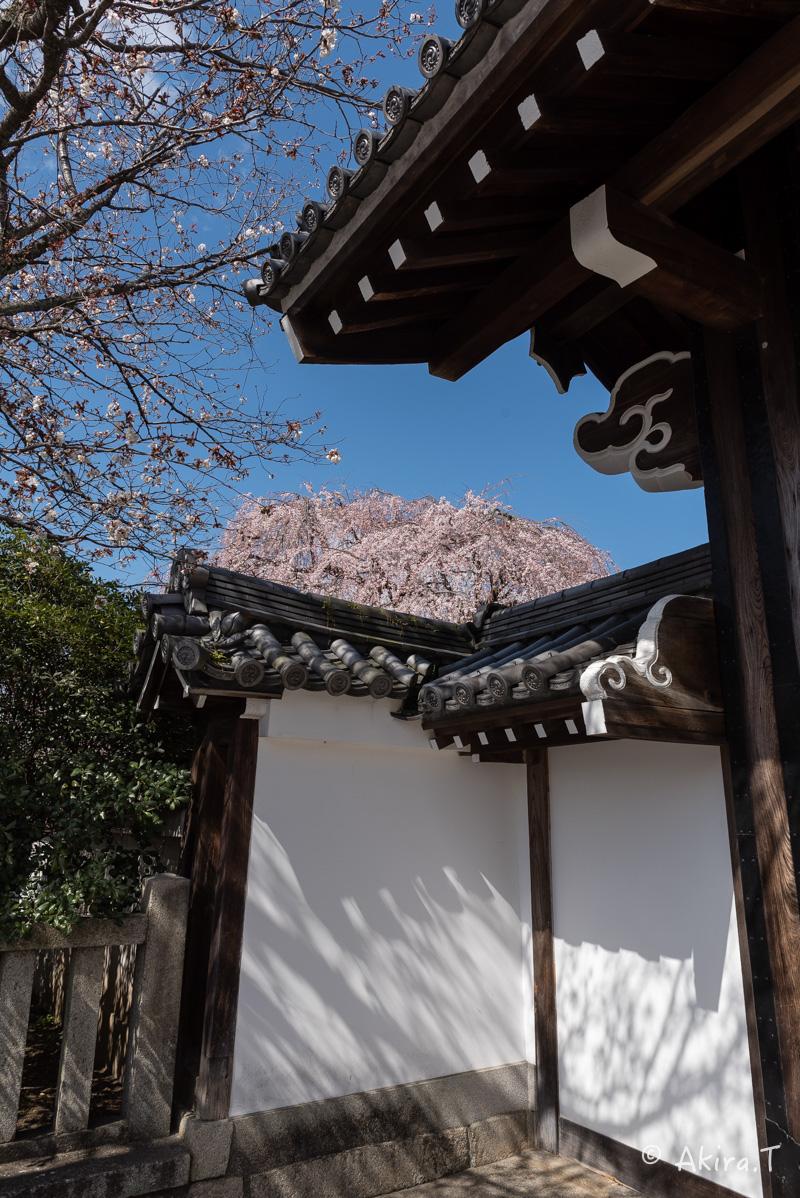 京都の桜 2016 〜本満寺〜_f0152550_22302319.jpg